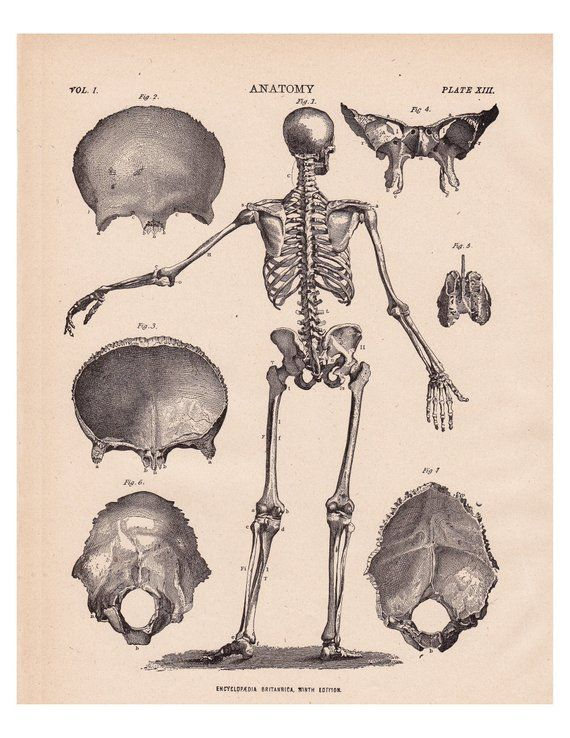 antique skeleton print a printable vintage digital image no etsy vintage printables skeleton print antique prints