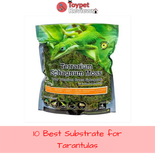 Best Substrate for Tarantulas 10 Products Reviewed