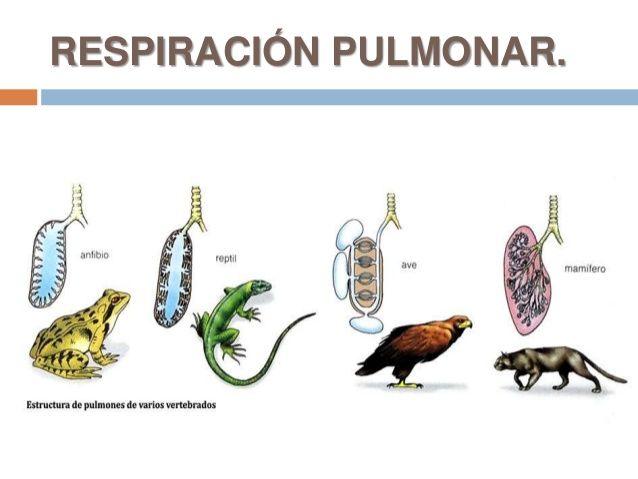 24 Ideas De Tejidos Animales Animales Histología Fisiología