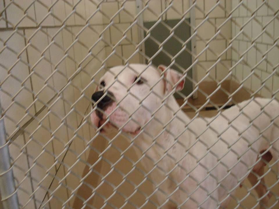 16++ Rockdale county animal shelter ideas