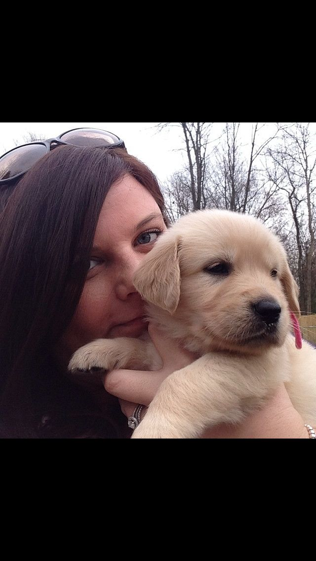 Beautiful American English Retriever Puppy From A Breeder In East Lansing Mi With Images English Retriever Beautiful Dogs Retriever Puppy