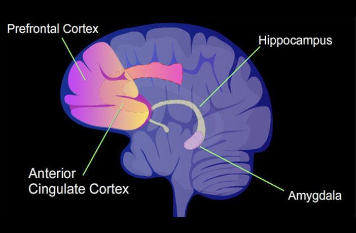 Neuroscience Study Uncovers How Threatening Information Invades The