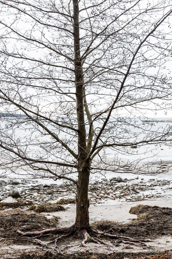 Villa Hottentotti: Matala vesi