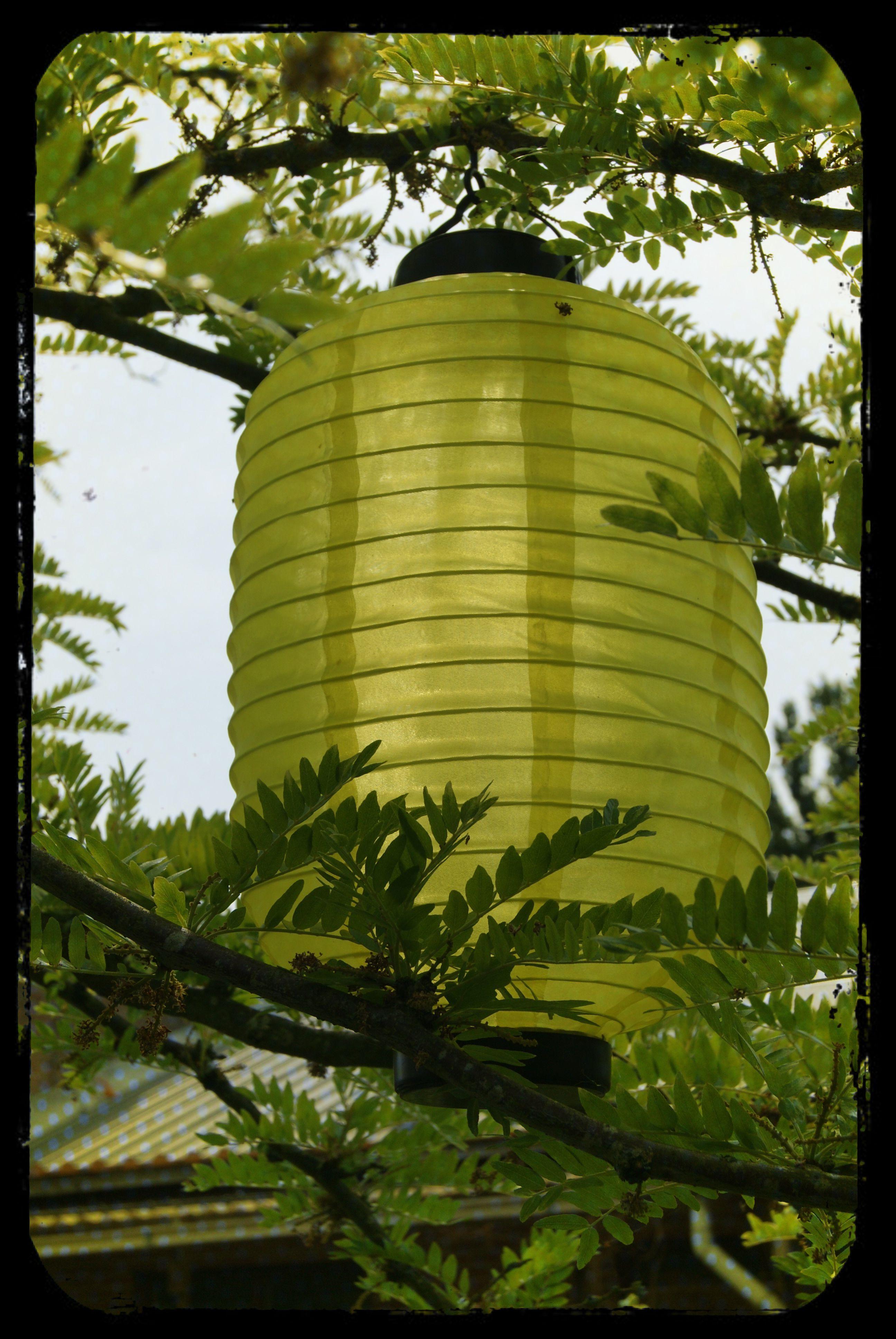 #lantern #lantaarn #lantaarntje