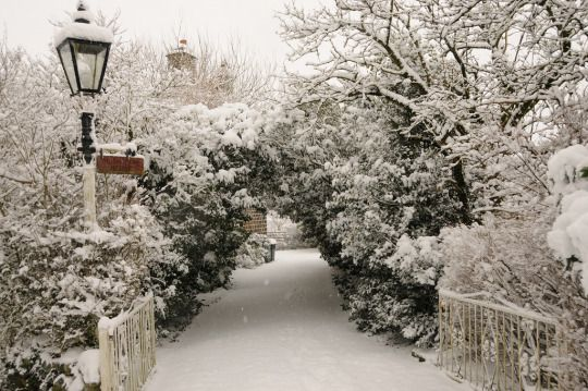 "joyeuxno-el: "" A Merry Little Christmas Blog ☕️🎄🎁 """