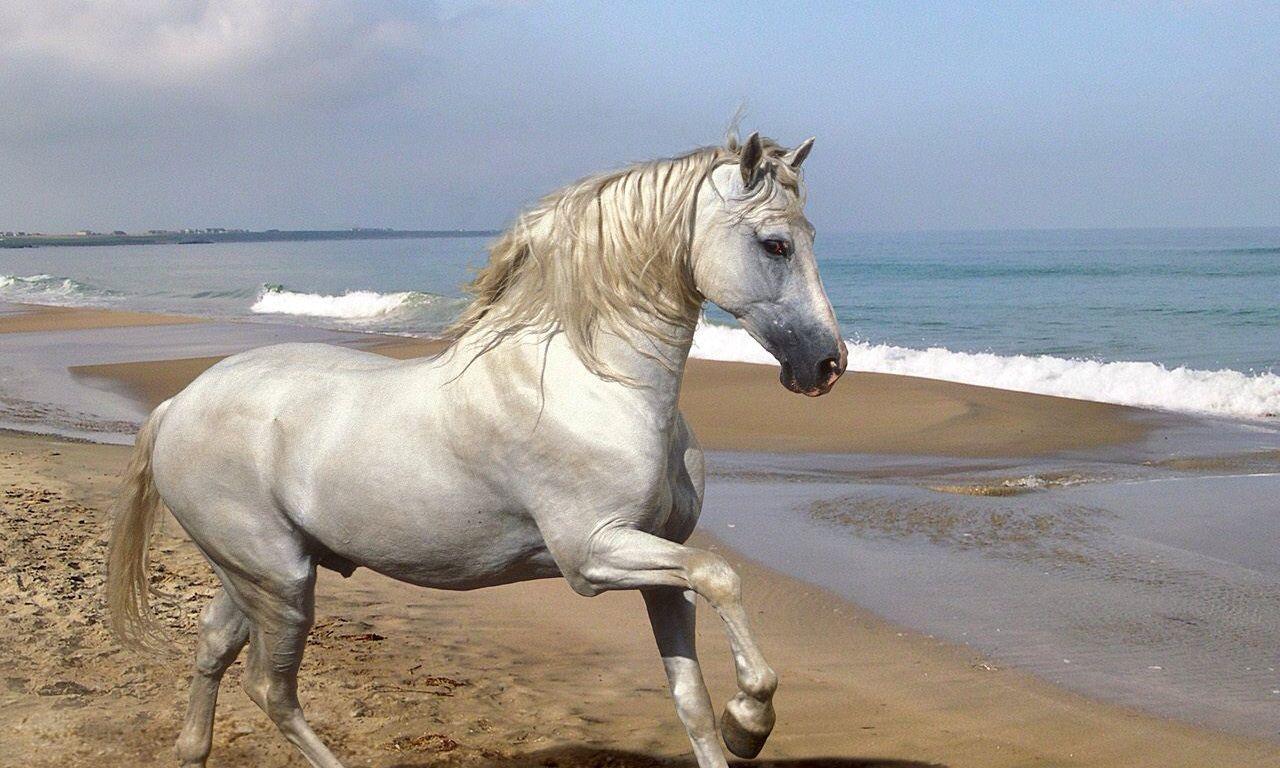 Must see Wallpaper Horse Spirit - 4abfe8238e5525f2305000211a131b2f  HD_879888.jpg
