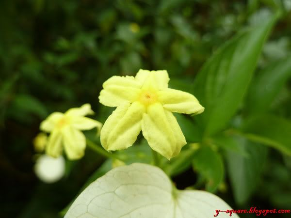 Taman Bunga Melaka