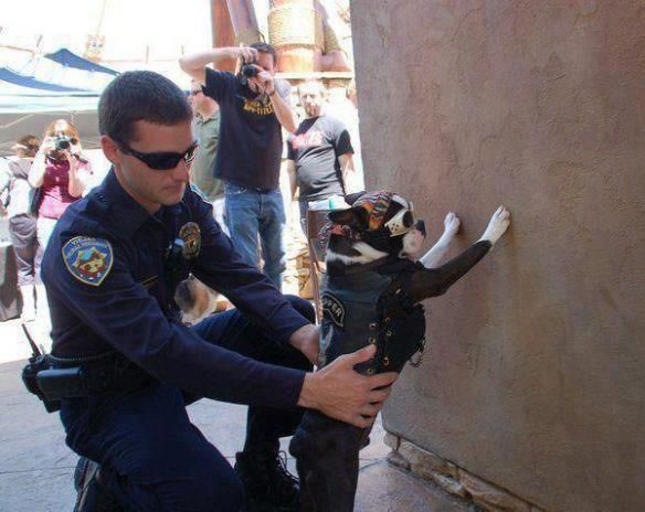 Paws against the wall... You have the right to remain silent...