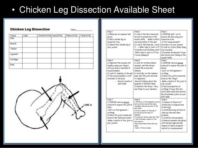 chicken leg dissection powerpoint muscular system skeletal system school pinterest. Black Bedroom Furniture Sets. Home Design Ideas