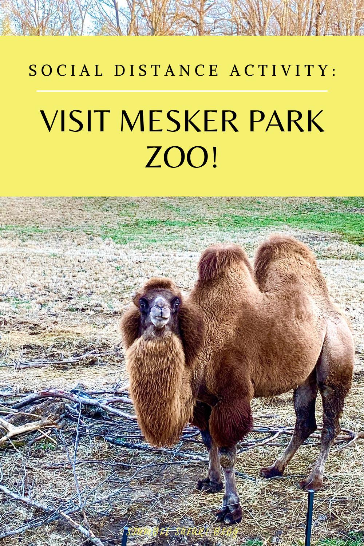 Visit Mesker Park Zoo Social Distance Activity In 2020 Indiana Travel Safari Travel Zoo