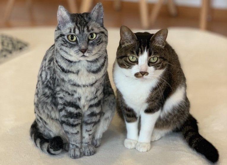 どっちが本物 羊毛フェルト猫が リアルかわいい と話題 でも視線が追ってくるのはなぜ Fnn Jpプライムオンライン フェルト 猫 羊毛フェルト 犬 羊毛フェルト 猫