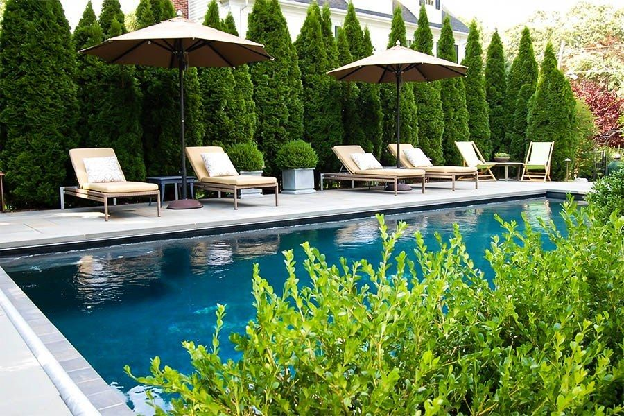 Buy Emerald Green Thuja Arborvitae Trees Online Arrive