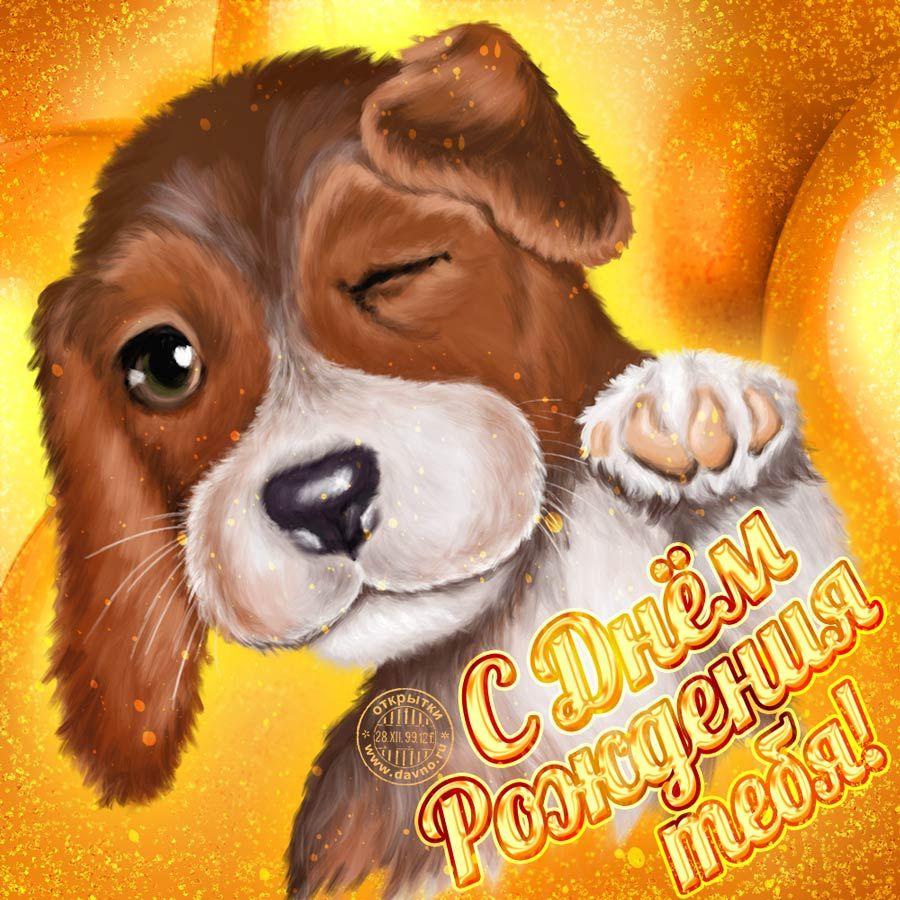 Картинки, открытки прикольные с собаками с нем рождения