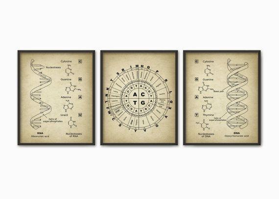 DNA and RNA Genetic Code Print Set Of 3 - Genetics Poster ...