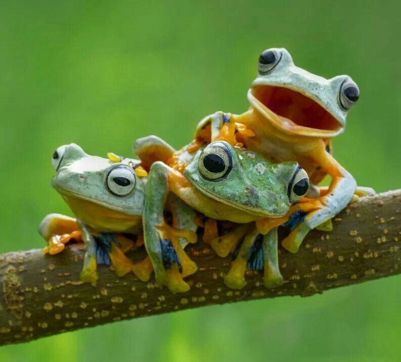 Colorful frogs animals animals animals beautiful cute animals - Funny frog pictures ...