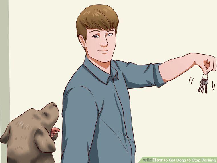 5 ways to get dogs to stop barking dog training dog