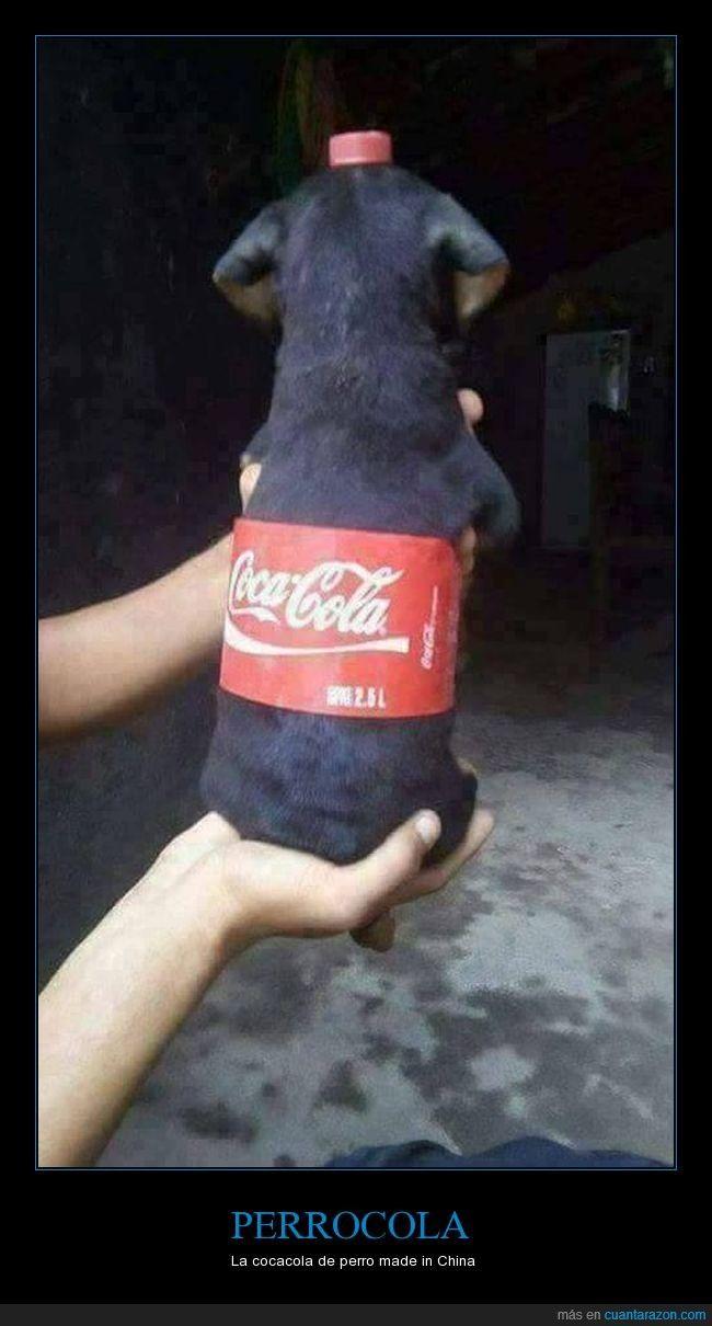 Perrocola La Cocacola De Perro Made In China Gracias A Http Www Cuantarazon Com Si Quieres Lee Perros Disfrazados Perros Chistosos Cachorros Graciosos