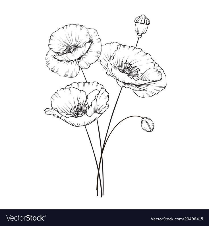 Vintage Poppy Illustration Wedding Flowers Patern Image Of Watercolor Detailed Illustration In 2020 Mit Bildern Mohn Zeichnung Blumenzeichnung Mohnblumen Tattoo