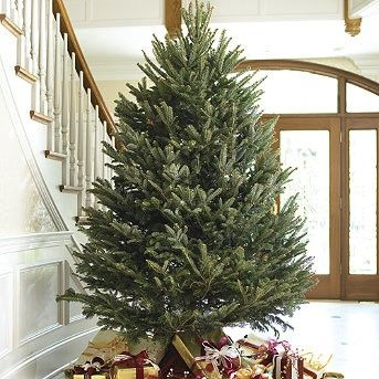 Frontgate Christmas Trees Bing Images Not Bad For An Artificial Tree Fir Christmas Tree Fraser Fir Christmas Tree Types Of Christmas Trees