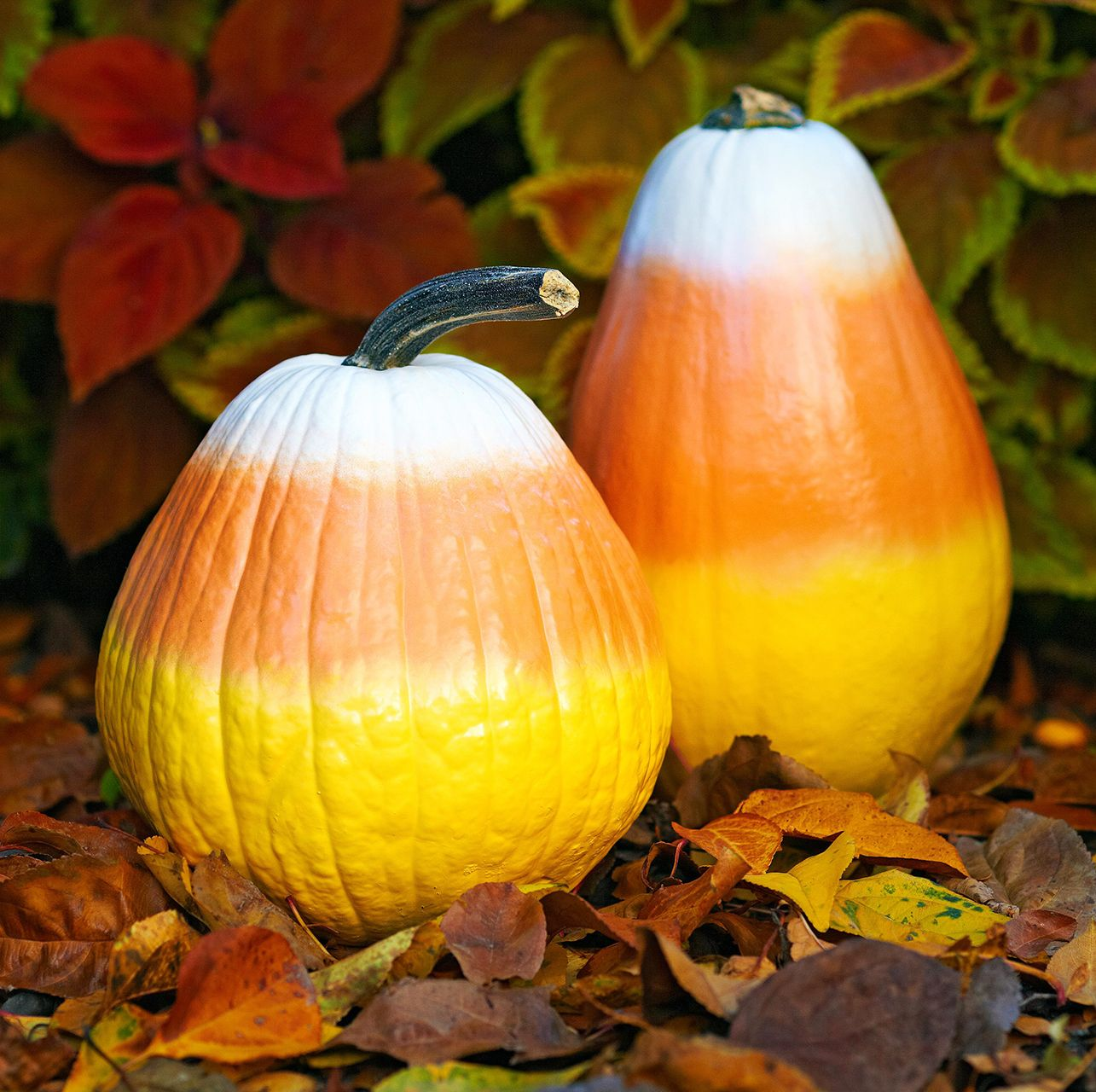 48 Easy Pumpkin Painting Ideas to Try This Year -   19 easy cute pumpkin painting ideas