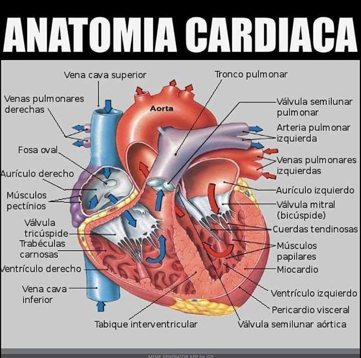 Pin de Comfort Gana en Medicine | Pinterest | Anatomía, Medicina y ...