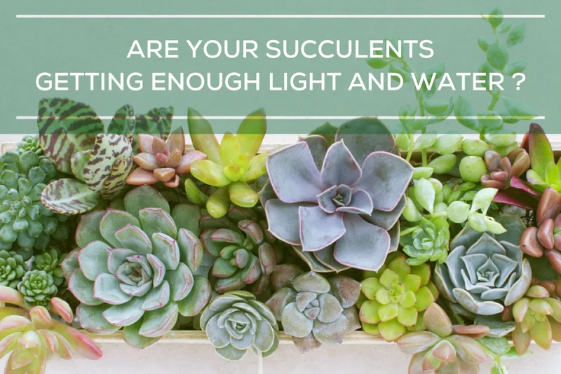 Blog | How to care for your succulents Page 3 - Succulents Box