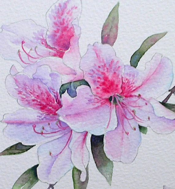 Azalea Original Watercolour Painting By By Theminervagallery Simple Watercolor Flowers Floral Watercolor Flower Drawing