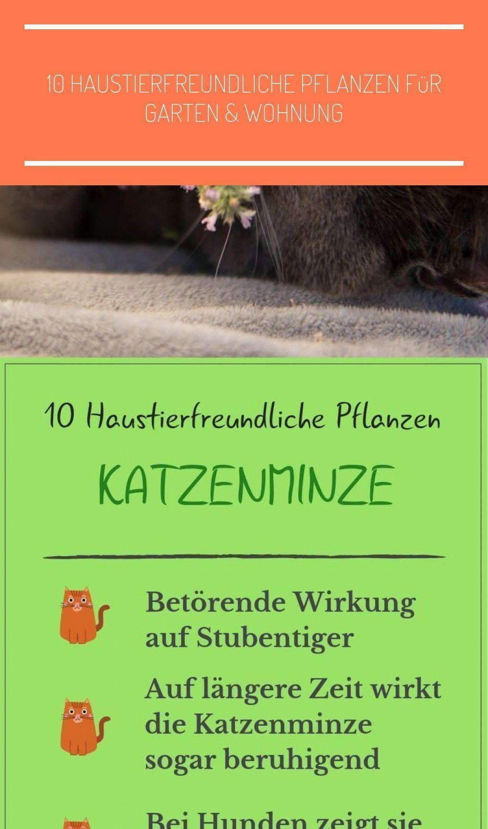 10 tierfreundliche Pflanzen, # Pflanzen # tierfreundlich # Katze # Katze süß # Katzenfutter ..., #Katze #Katzenfutter #Pflanzen #SÜS #tierfreundlich #Tierfreundliche