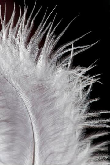 Plume Photo Noir Et Blanc Tableau Noir Et Blanc Noir Et Blanc