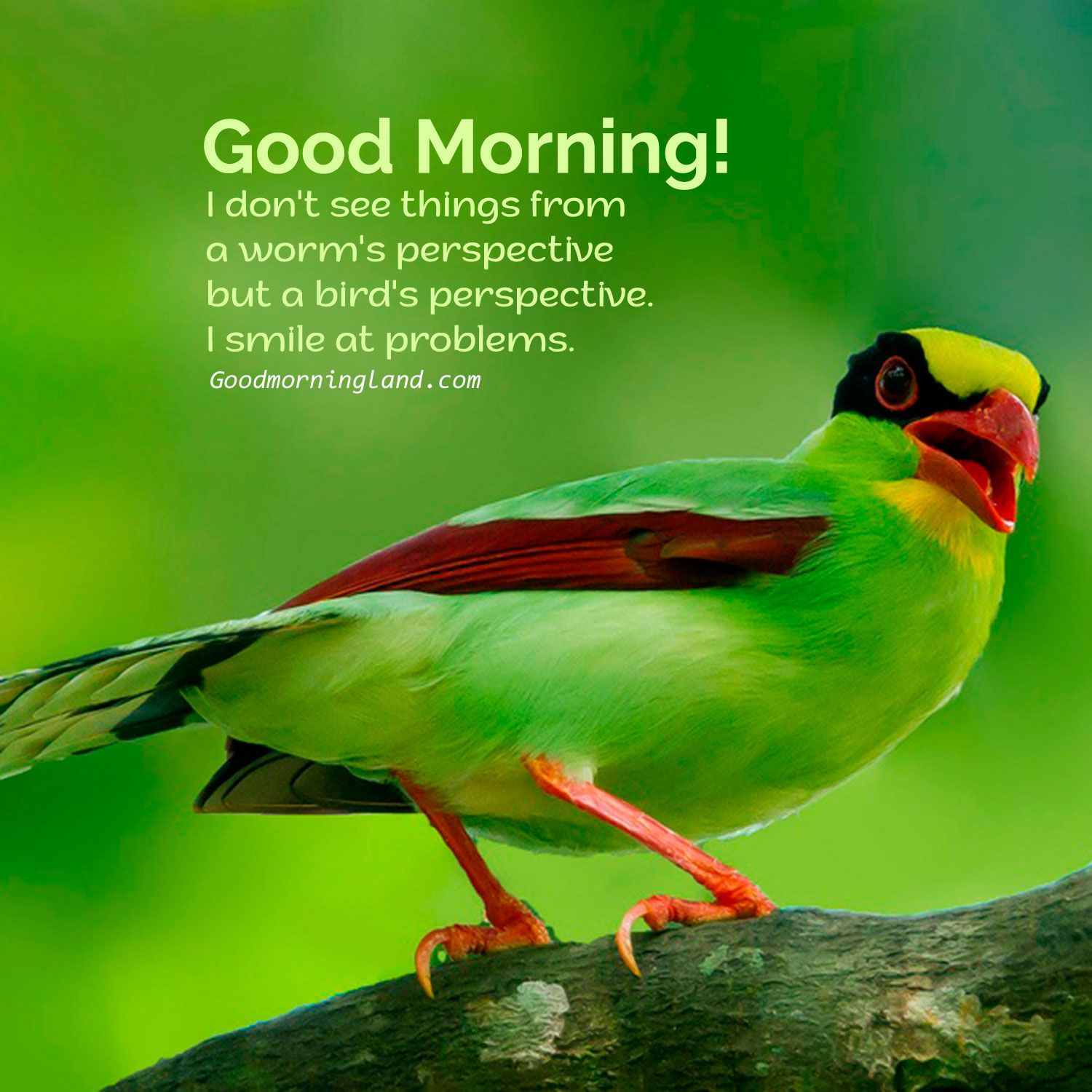 Good Morning Birds Graphics and Images ...