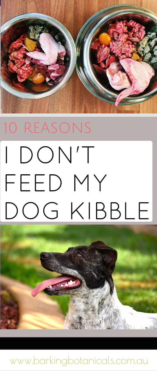 10 reasons i dont feed my dog kibble dry dog food healthy 10 reasons i dont feed my dog kibble forumfinder Images