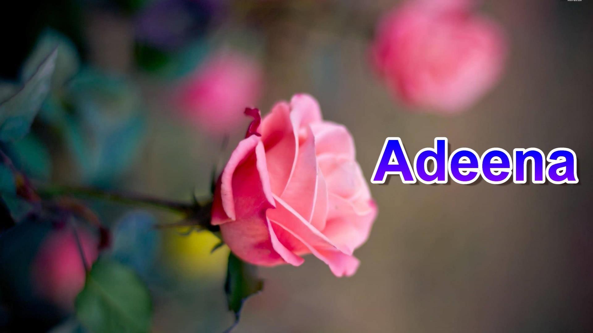 Adeena Name Whatsapp Status Video Status By Sani Production In 2020 Pink Rose Wallpaper Hd Pink Rose Flower Flowers