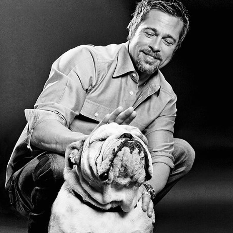 Jacques - Brad Pitt's Famous Bulldog
