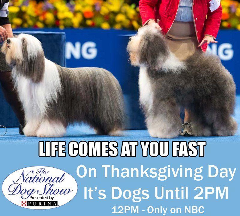 nationaldogshow hashtag on Twitter National dog show
