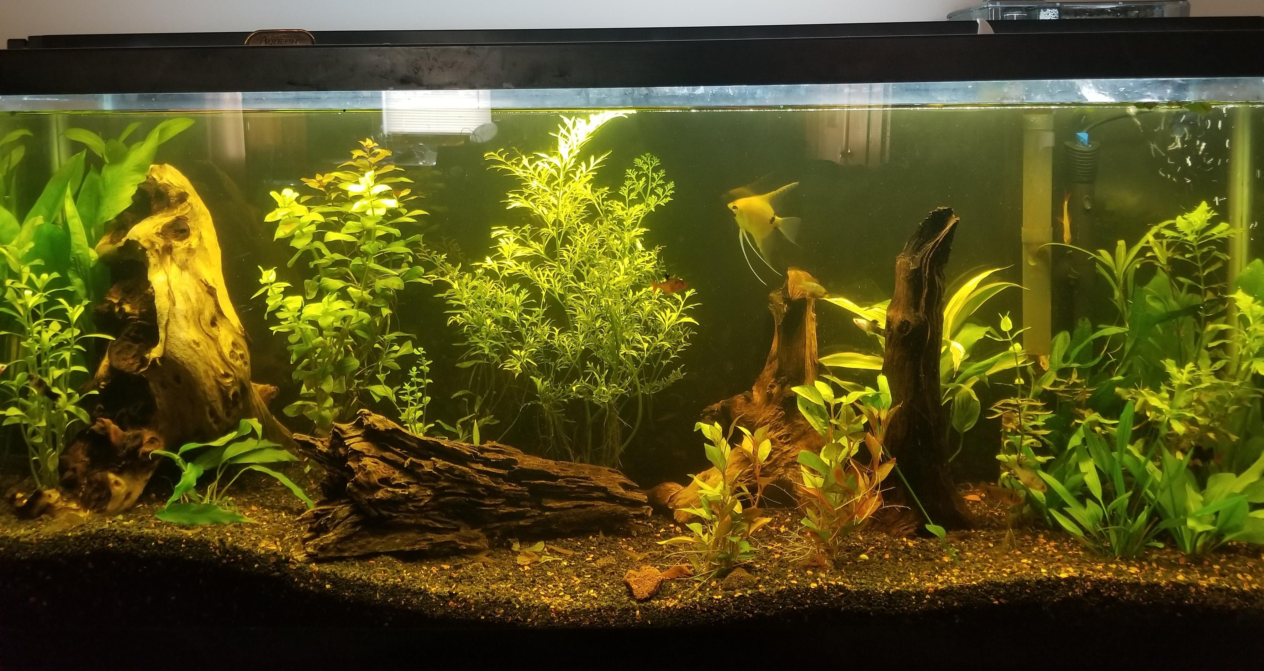 My g more pics of tank progression and fish in comments enjoy