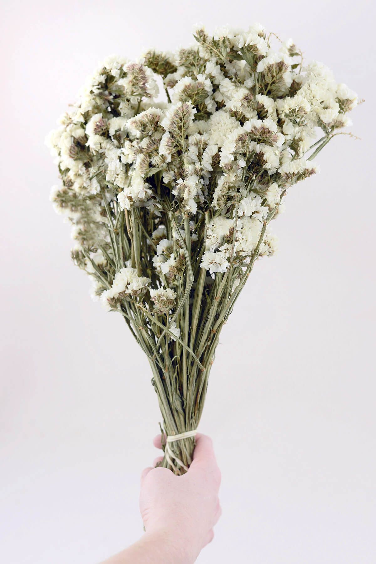 Dried white statice flowers in 2018 my new house pinterest dried white statice flowers mightylinksfo