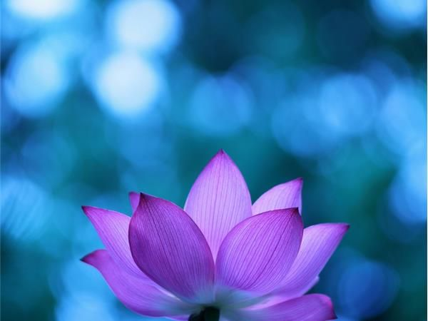 Guided meditation for the new year lotus flower present moment guided meditation for the new year lotus flower present moment peace 0704 by thewellnesscoach self help podcasts mightylinksfo