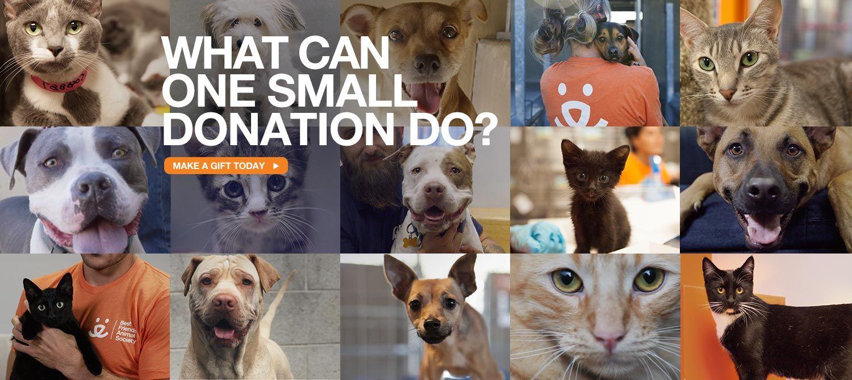 Nate's Honor Animal Rescue Animals, Animal rescue, Rescue
