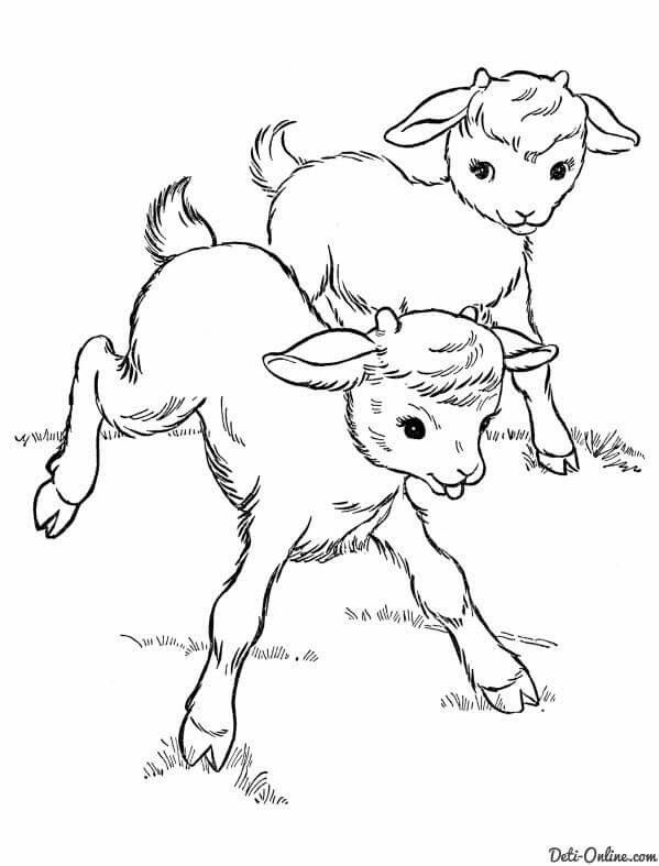 Farm Animal Coloring Pages Printable Baby Goats Page