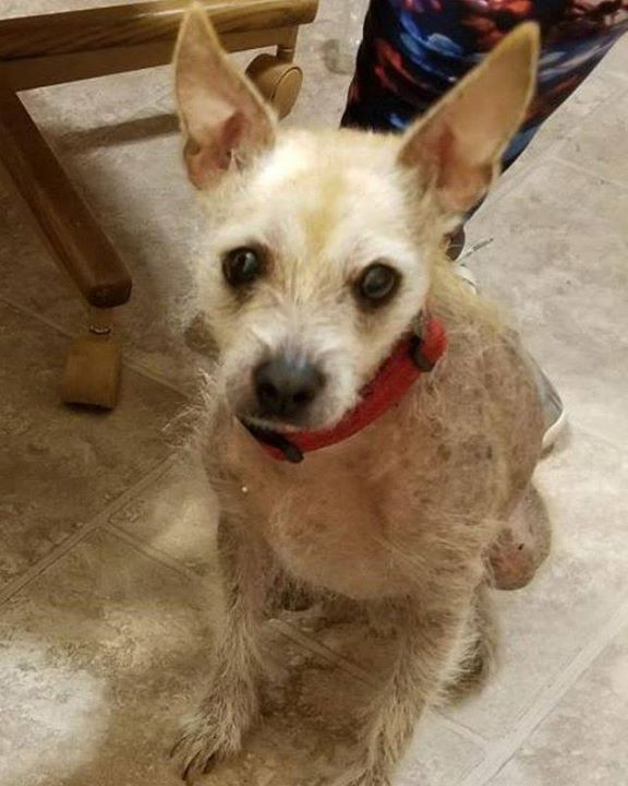 Pin by Lost Dogs MN on Photos from Lost Dogs Minnesota