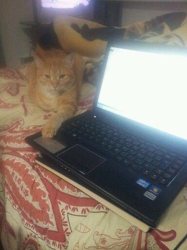 Mi gatito tigre buscando el mouse