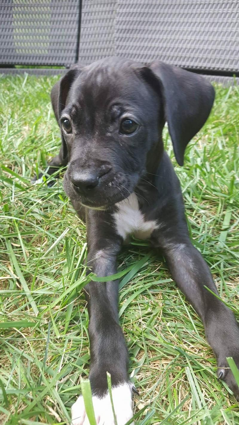 Adopt Edgar on Petfinder Pet search, Pets, Rescue dogs