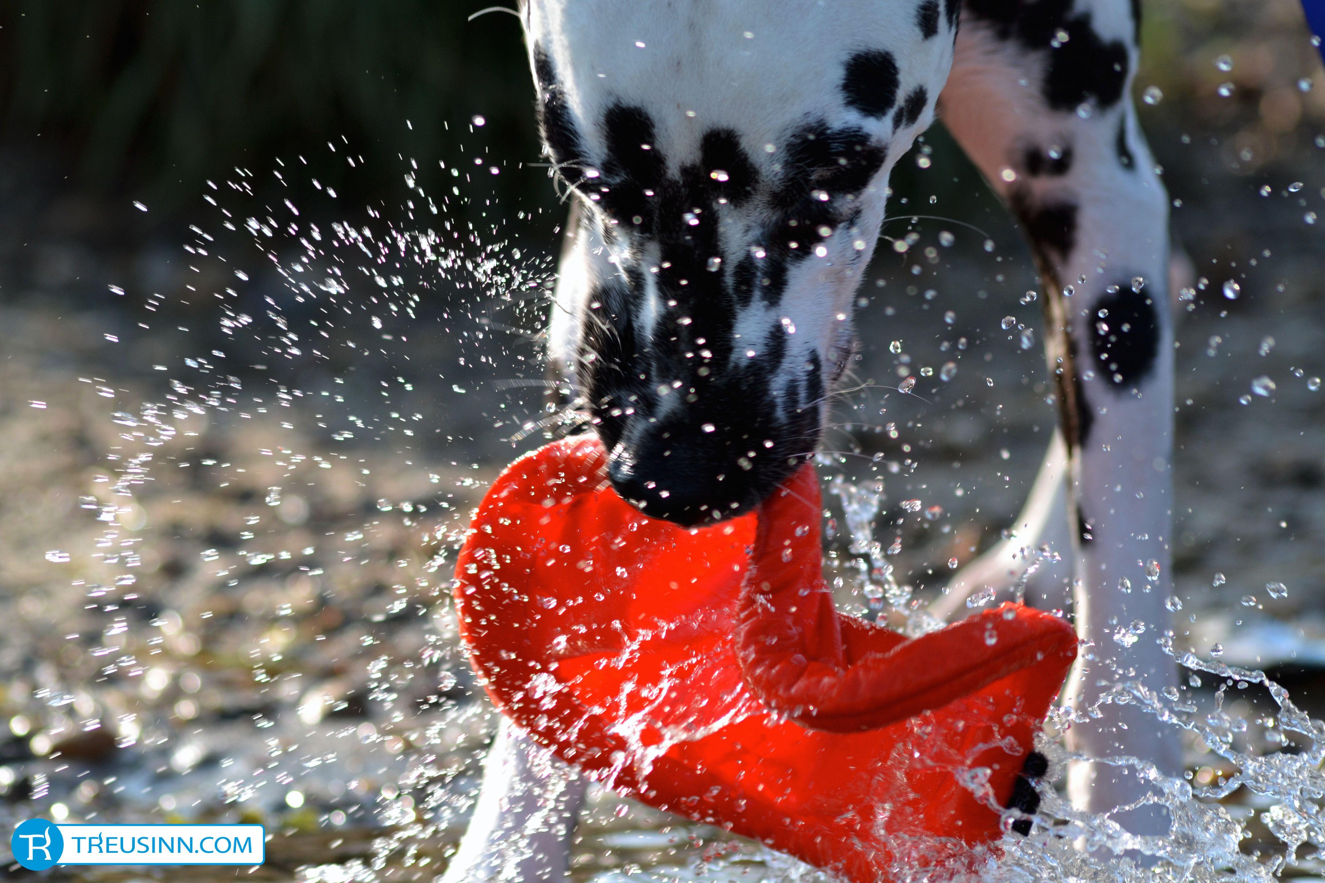 Das Frisbee von Treusinn lässt Hunde-Herzen höher fliegen! http://www.treusinn.com/hund/hundefrisbee-stoff #Treusinn