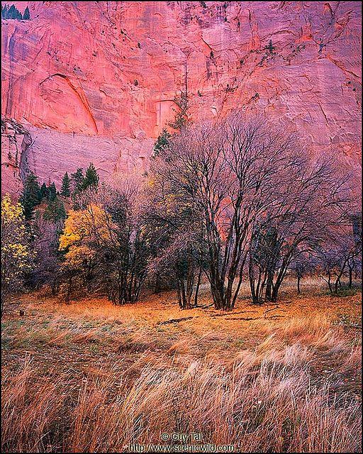 ✯ Fall in the Canyon - Utah
