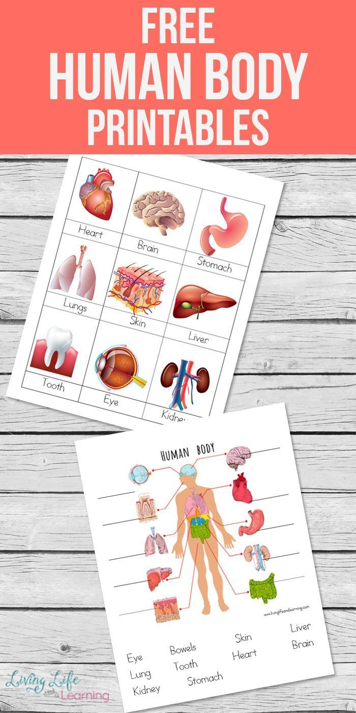 Human Body Printables for Kids | Pinterest | Human body, Sons and ...