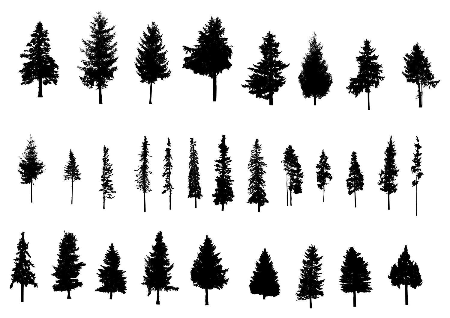 Resolution 352 624 Px File Format Png File Size 22 42 Kb Free Download Pine Tree Silhouette 1 Png Re Pine Tree Silhouette Tree Silhouette Silhouette Png