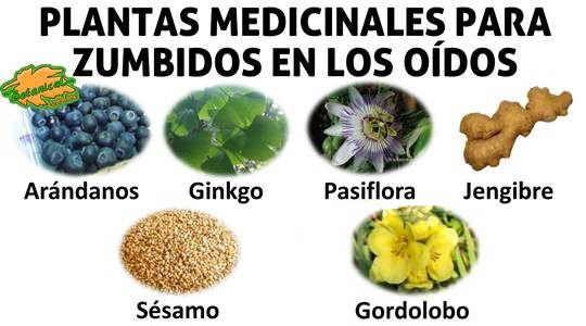 Plantas Remedios Oido Zumbido Jpg 540 300 Hierbas Curativas Fitoterapia Remedios