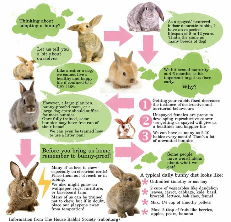 Domestic rabbit infographic information from http