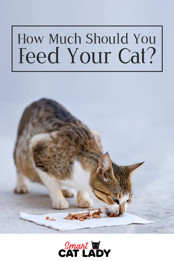 How Much Wet Food To Feed A Kitten Per Day Kitten Puppies And Kitties Kitten Food