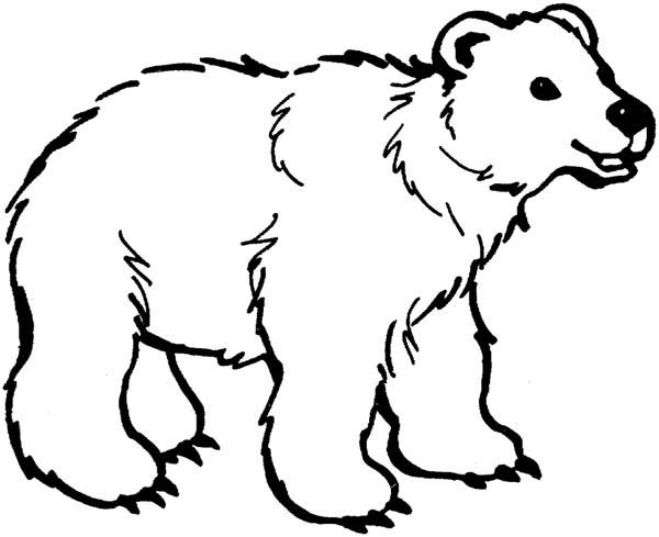 Fluffy Polar Bear Coloring Page Kids Play Color Hewan Gambar Hewan Halaman Mewarnai